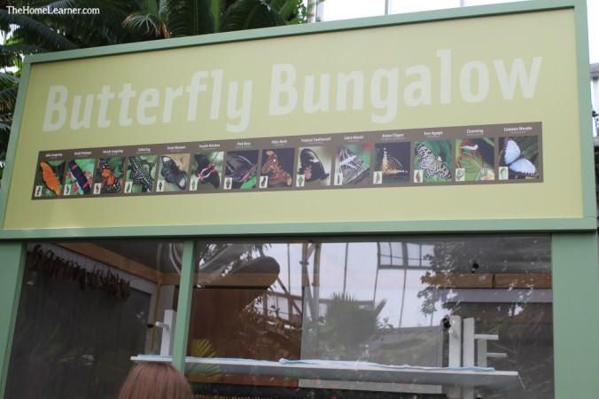 Unschooling part 2 Butterflies at FMG