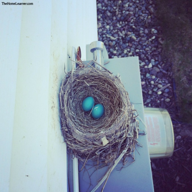 Interest Led Nest